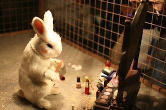 中国要求进口化妆品动物测试 部分商家拒绝在华销售