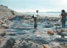 海底古森林遗迹