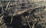 一场大火连烧三座大棚 400棵桃树被毁损失数十万元