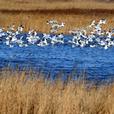 大连市生态与湿地保护协会