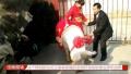 1260斤猪接新娘 花样婚礼引发众人拍照留念