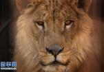 伊拉克摩苏尔动物园:战火中的动物遭遇悲惨境遇