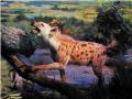 大连自然博物馆:非洲第二大食肉兽——斑点鬣狗