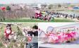 阜南柴集桃花节两万游客慕名而来