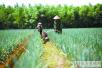 """济宁农业发展""""接二连三"""" 让农民的钱袋子鼓起来"""
