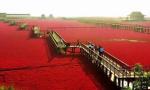 首批国家湿地旅游示范基地出炉 盘锦红海滩上榜