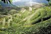 中国农垦节水农业产业技术联盟在新疆成立