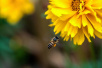 为什么你是工蜂不是蜂王?蜜蜂食谱影响卵巢