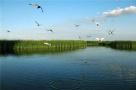 2020年前 江苏将建16个湿地保护区14个湿地公园