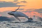 鲸鱼跃出水面