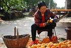 老人一天削百斤柿子