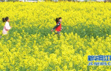 兴泰高速正式通车,南京市民周边看油菜花又多了一处