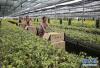 2020年临沂将建成80处省级农业标准化生产基地