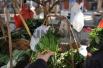 红薯叶的营养价值高吗?常吃有啥益处?