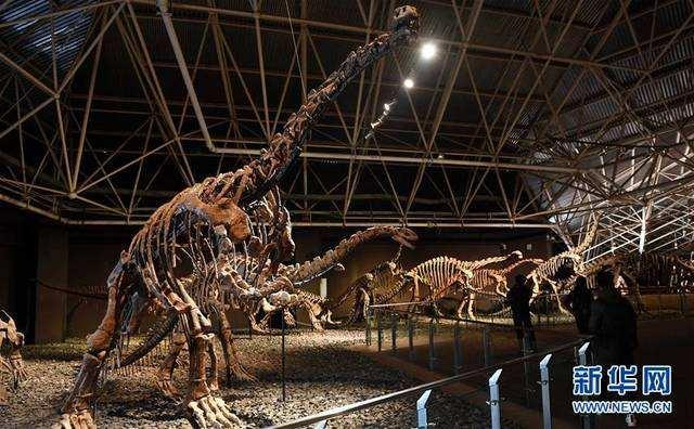 手机幸运飞艇开奖记录:8块流落欧洲的恐龙和鸟化石万里归乡