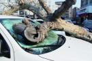 大树砸坏宝马车 车主索赔保险公司却不干了