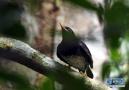 热带雨林 百鸟家园