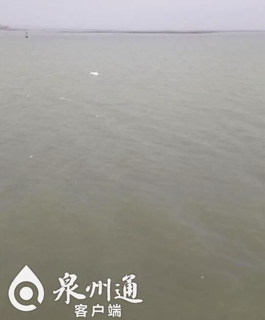 美美哒!一级保护动物白海豚现身泉州石井海面