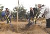 """2018年""""国际森林日""""植树纪念活动在北京举行"""