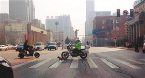 沈阳交警护送被困车流中的小狗过马路 市民点赞