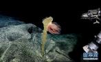 科学号海底探秘现了啥