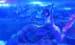 南京海底世界上演《美人鱼之恋》