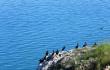 青海湖鸟岛及沙岛景区停止营业以保护生态