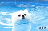 猪流感病毒可传染给狗 犬类或成大规模流感疫情风险源