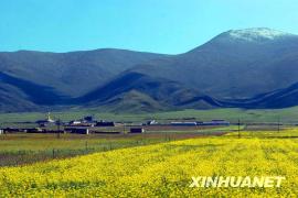 青海:旅游 让大通乡村繁花似锦
