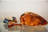 世界首次!琥珀中发现一条0.99亿年前的小蛇