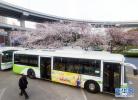 石家庄:中华大街路面塌陷 7条公交线路临时调整