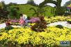 郑州也能赏菊花了:人民公园4万盆菊花绽放