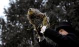 美国举行第133个土拨鼠日