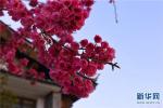 承德市双?#26143;?#20030;办第六届海棠花节