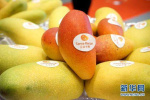 今年石家庄水果价格持续走高 产量减少是主因