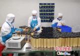 郏县薛店镇:党员带动280余户贫困户增收致富