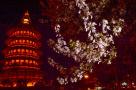 洛阳:春花绽放夜色美