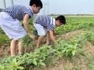 漯河小学百余名孩子下地干农活识农事