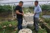 你知道吗?葡萄架下套种大蒜 改良土壤还能杀菌防虫
