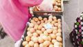 鞍山蛋价一周蹿高四成 天热难储存或不会有太大涨幅