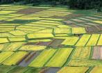 广东:开放商将土地违法闲置 或无偿收回