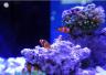 """百种海洋生物登陆江城 这个周末去科技馆看""""南海之美"""""""