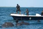 海军营救被困大象