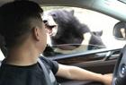 八达岭游客又被熊咬