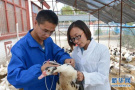 河南省教育厅:确保大学生到基层就业福利多