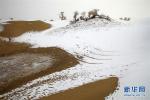 当沙漠下起了雪:新疆塔克拉玛干沙漠雪景如画