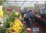 情人节撞上春节 青岛鲜花市场有价无市