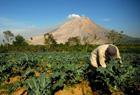 火山下农民淡定劳作