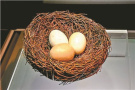 """南宋官窑博物馆演绎""""长安春"""" 最受瞩目的是三枚蛋"""