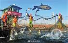 媒体直播渔民打鱼
